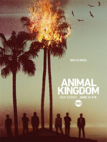 По волчьим законам / Animal Kingdom (1 сезон/2016/WEB-DLRip)