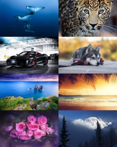 Wallpapers Mix №702